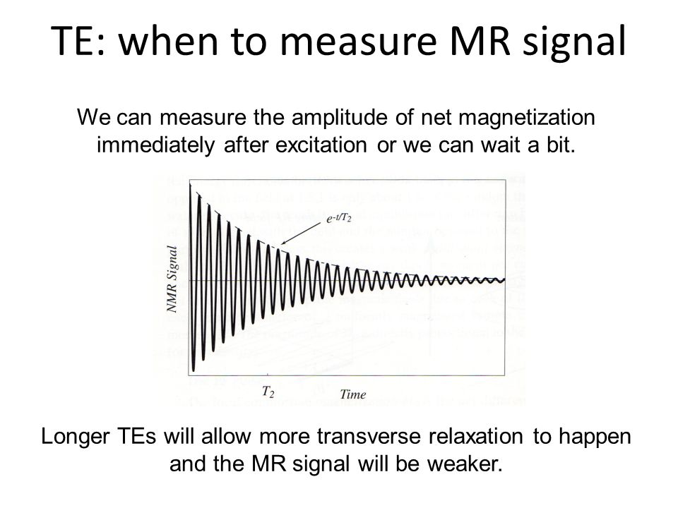 TE: when to measure MR signal We can measure the amplitude of net magnetization immediately after excitation or we can wait a bit. Longer TEs will all