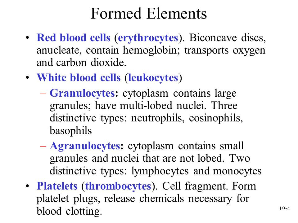 19-15 Platelets Cell fragments pinched off from megakaryocytes in red bone marrow Important in preventing blood loss –Platelet plugs –Promoting formation and contraction of clots
