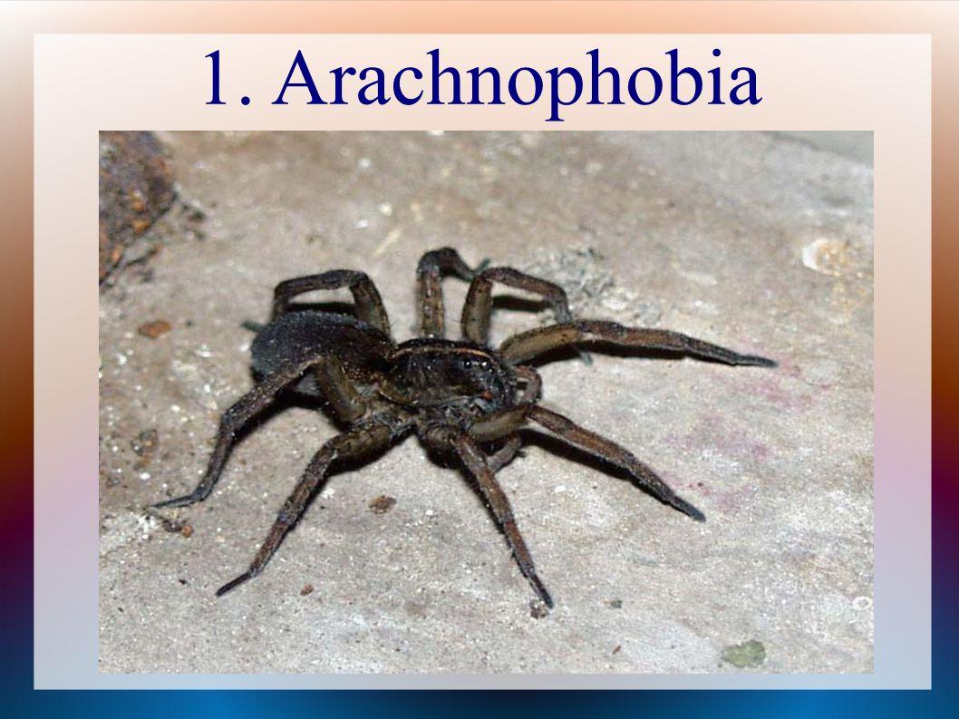 1. Arachnophobia