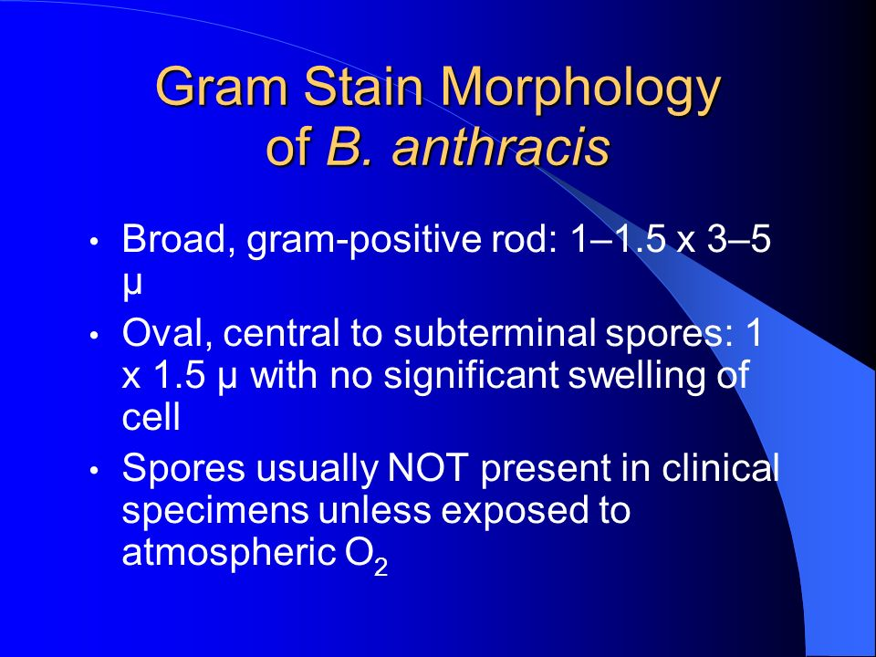 Gram Stain Morphology of B. anthracis Broad, gram-positive rod: 1–1.5 x 3–5 μ Oval, central to subterminal spores: 1 x 1.5 μ with no significant swell