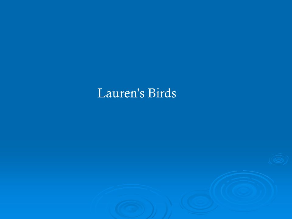 Laurens Birds