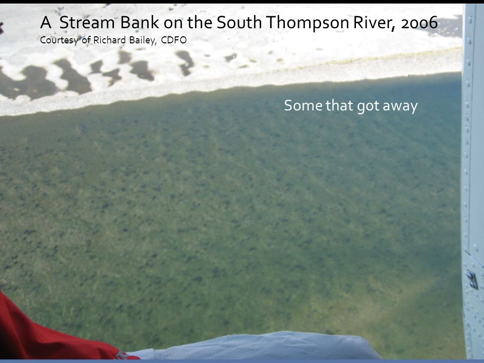 Some that got away A Stream Bank on the South Thompson River, 2006 Courtesy of Richard Bailey, CDFO
