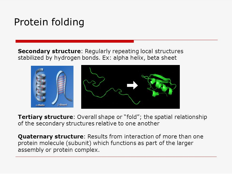 Secondary structure: Regularly repeating local structures stabilized by hydrogen bonds. Ex: alpha helix, beta sheet Tertiary structure: Overall shape