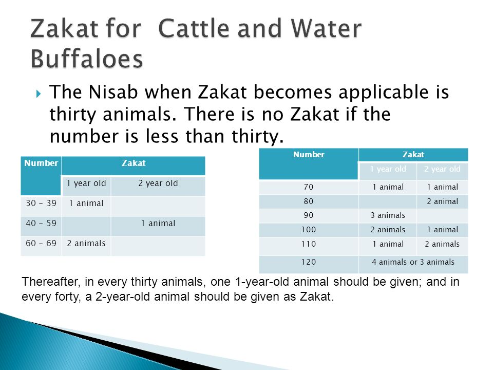The Nisab when Zakat becomes applicable is thirty animals. There is no Zakat if the number is less than thirty. NumberZakat 1 year old2 year old 30 -