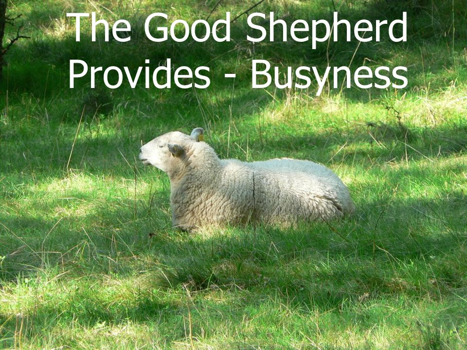 The Good Shepherd Provides - Busyness