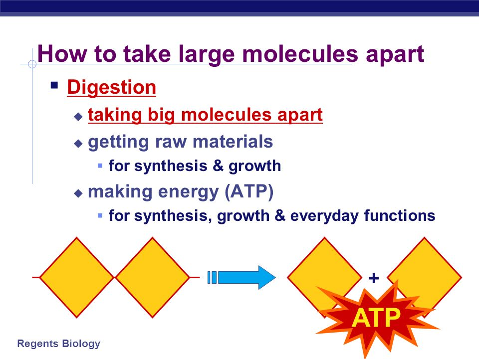 Regents Biology How to build large molecules Synthesis building bigger molecules from smaller molecules building cells & bodies repair growth reproduction + ATP