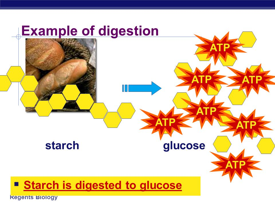 Regents Biology How to take large molecules apart Digestion taking big molecules apart getting raw materials for synthesis & growth making energy (ATP) for synthesis, growth & everyday functions + ATP
