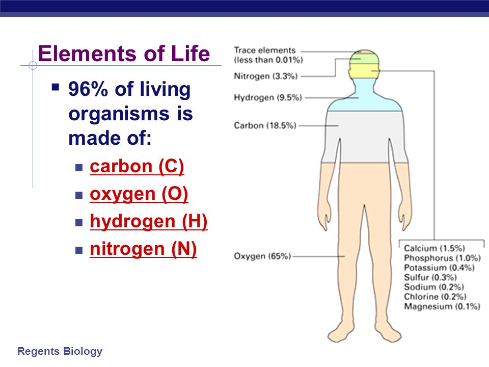 Regents Biology 2006-2007 The Chemistry of Life What are living creatures made of.
