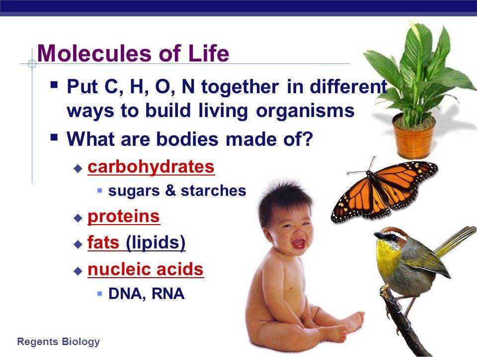Regents Biology 96% of living organisms is made of: carbon (C) oxygen (O) hydrogen (H) nitrogen (N) Elements of Life