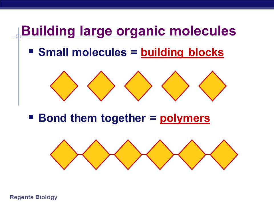 Regents Biology Building large molecules of life Chain together smaller molecules building block molecules = monomers Big molecules built from little molecules polymers