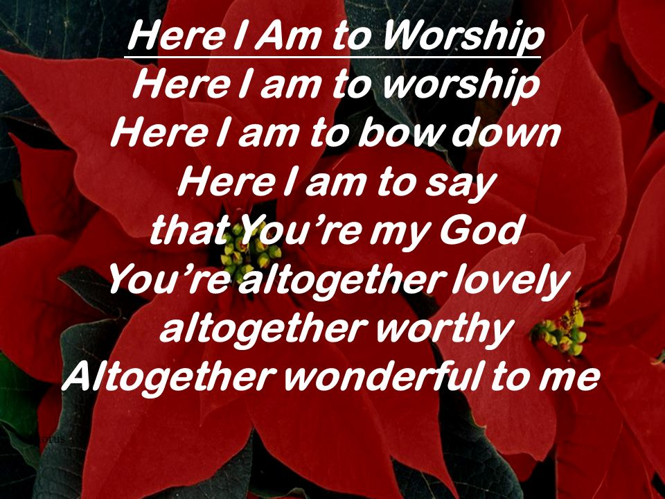Here I Am to Worship Here I am to worship Here I am to bow down Here I am to say that Youre my God Youre altogether lovely altogether worthy Altogethe
