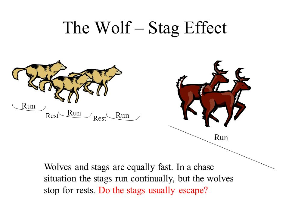 The Wolf – Stag Effect Run Wolves and stags are equally fast. In a chase situation the stags run continually, but the wolves stop for rests. Do the st
