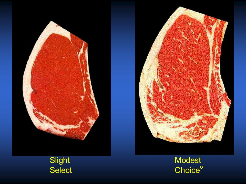 Modest Choice o Small Choice -