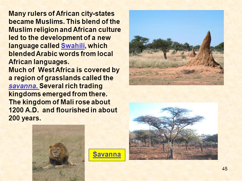 Savanna Many rulers of African city-states became Muslims. This blend of the Muslim religion and African culture led to the development of a new langu