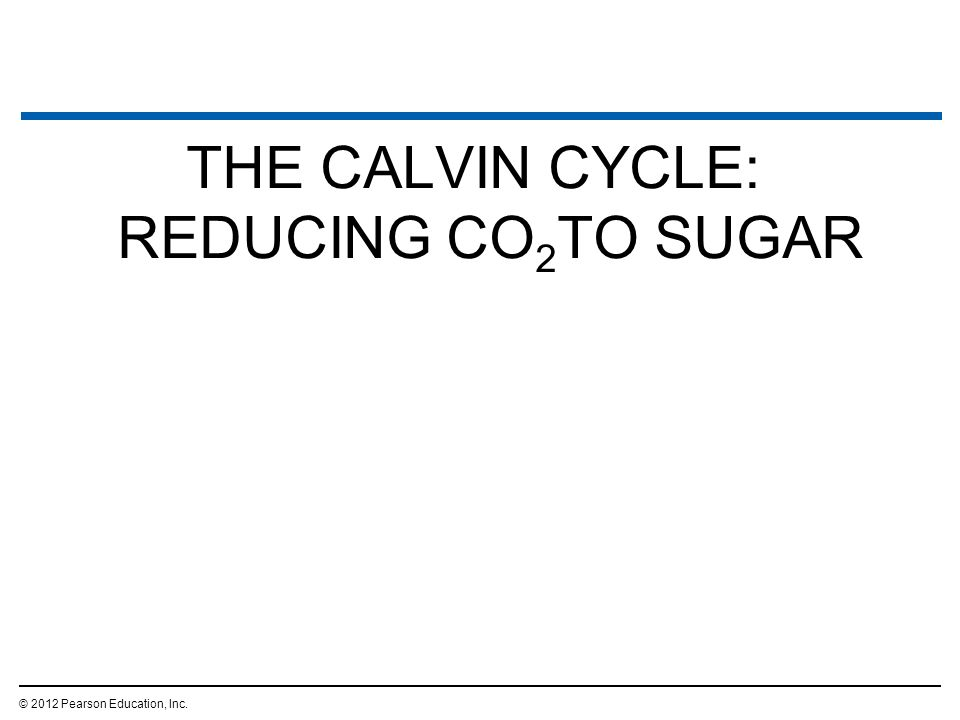 THE CALVIN CYCLE: REDUCING CO 2 TO SUGAR © 2012 Pearson Education, Inc.