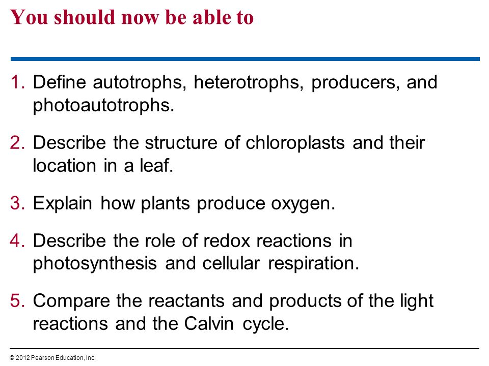 You should now be able to 1.Define autotrophs, heterotrophs, producers, and photoautotrophs. 2.Describe the structure of chloroplasts and their locati