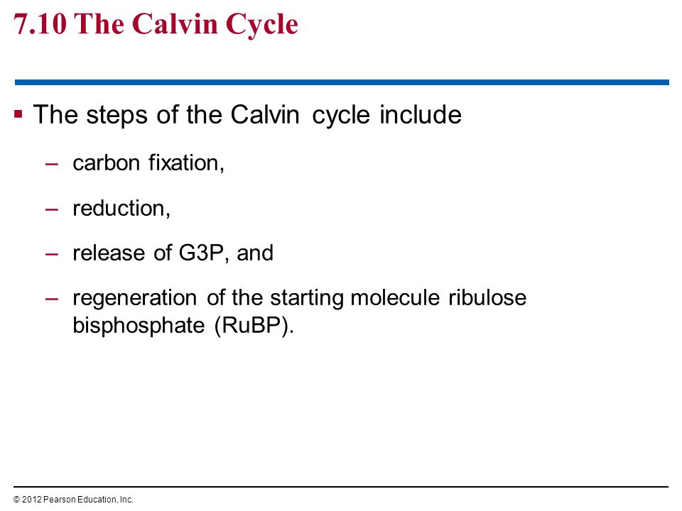 7.10 The Calvin Cycle The steps of the Calvin cycle include –carbon fixation, –reduction, –release of G3P, and –regeneration of the starting molecule