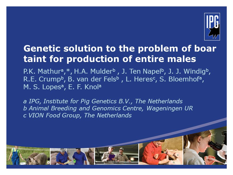 Genetic solution to the problem of boar taint for production of entire males P.K. Mathur a,*, H.A. Mulder b, J. Ten Napel b, J. J. Windig b, R.E. Crum