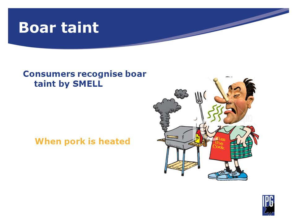 Boar taint Consumers recognise boar taint by SMELL When pork is heated