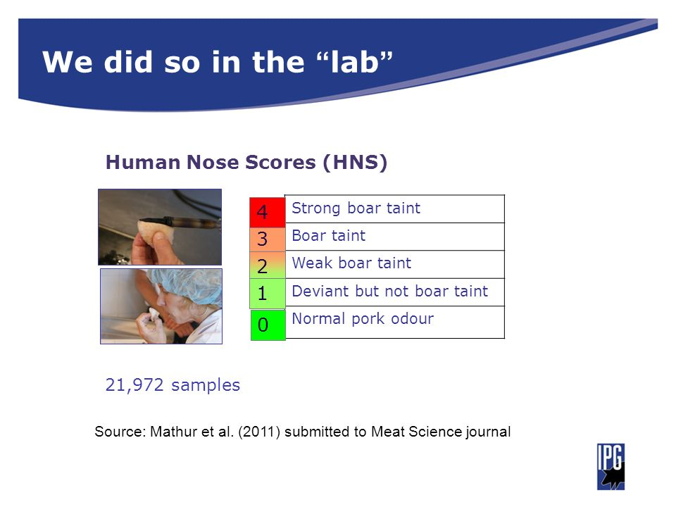 We did so in the lab 21,972 samples Strong boar taint Boar taint Weak boar taint Deviant but not boar taint Normal pork odour 3 2 1 0 4 Human Nose Sco