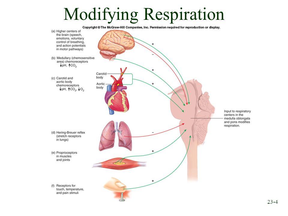 23-4 Modifying Respiration