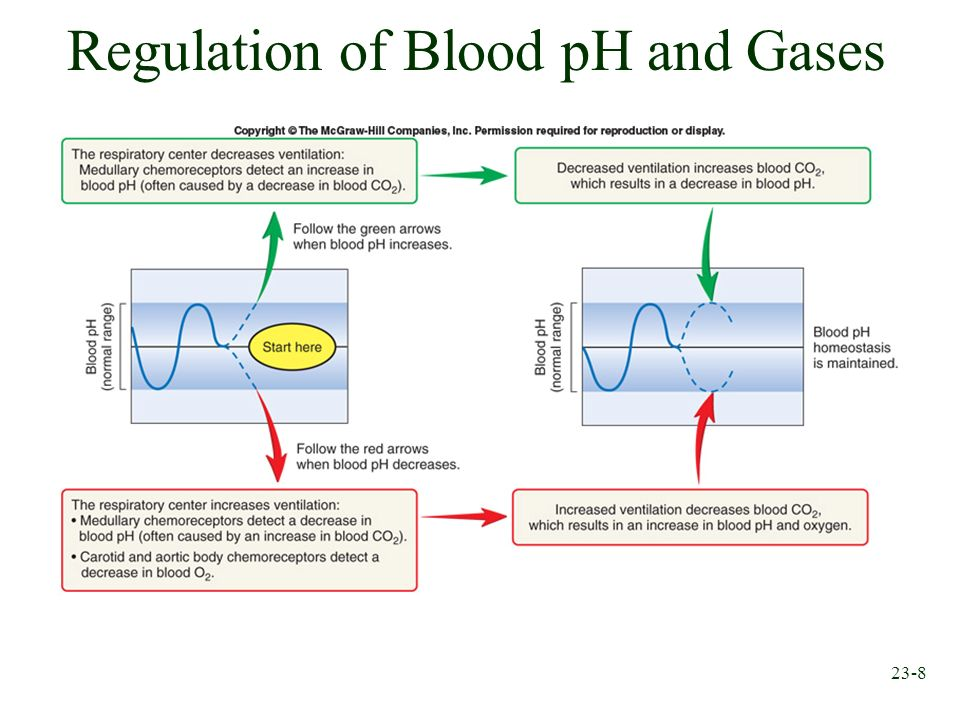 23-8 Regulation of Blood pH and Gases
