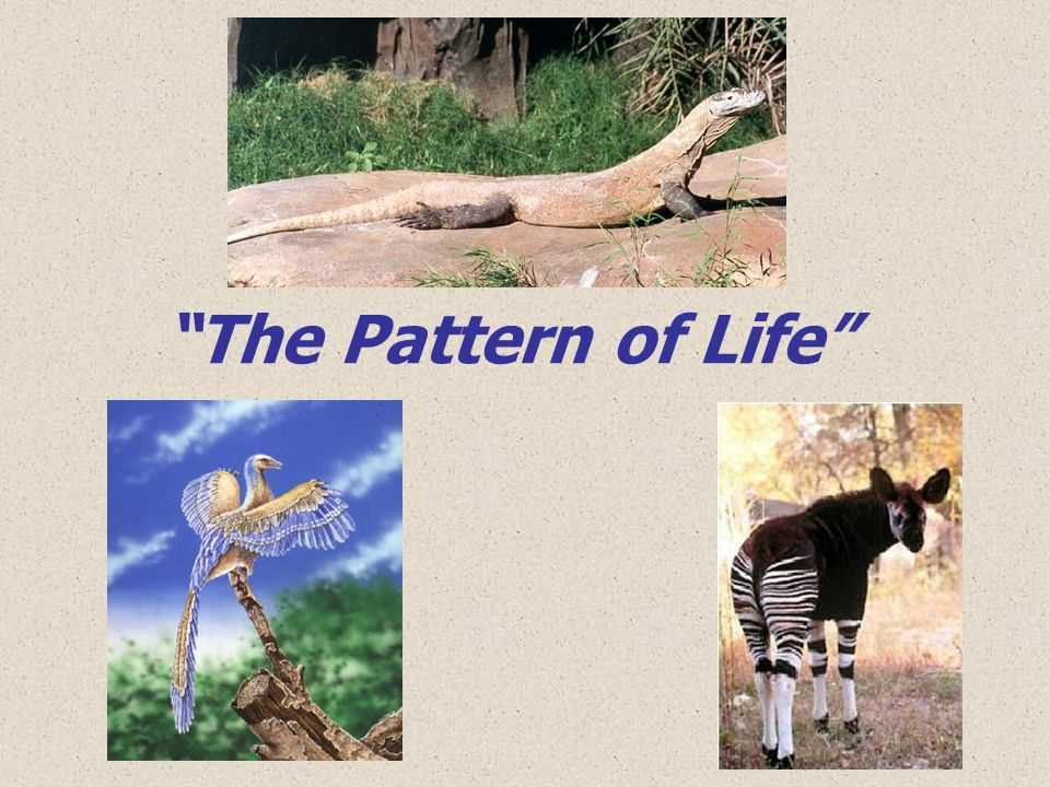 The Morphological Distribution Anatomical characteristics (morphology) of both the fossil & living organisms can be depicted by points on a multidimensional graph.