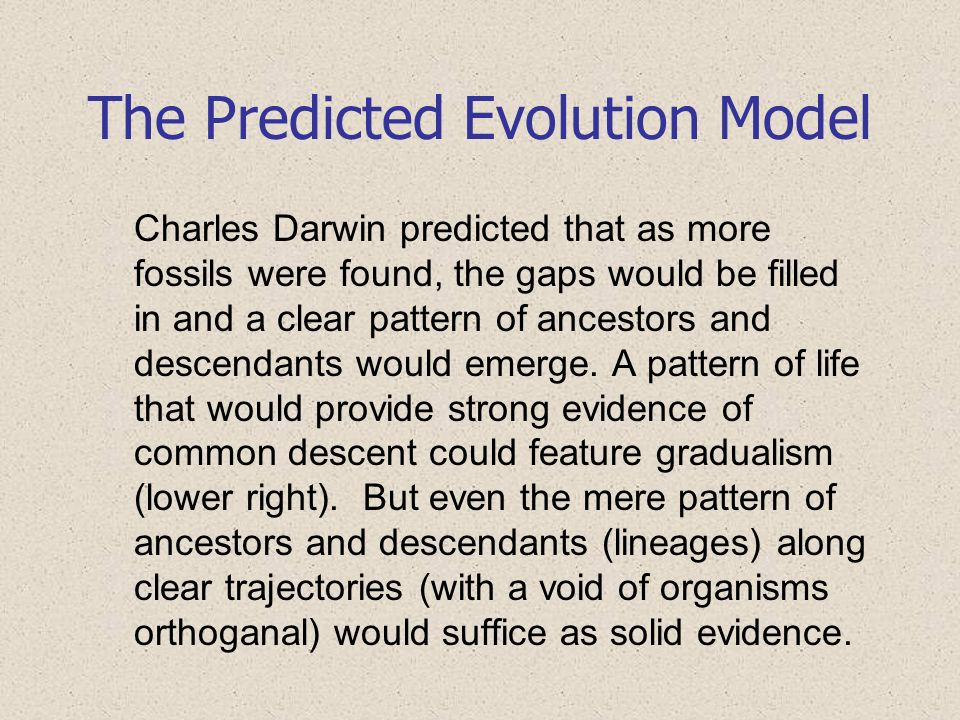 The Predicted Evolution Model Charles Darwin predicted that as more fossils were found, the gaps would be filled in and a clear pattern of ancestors a