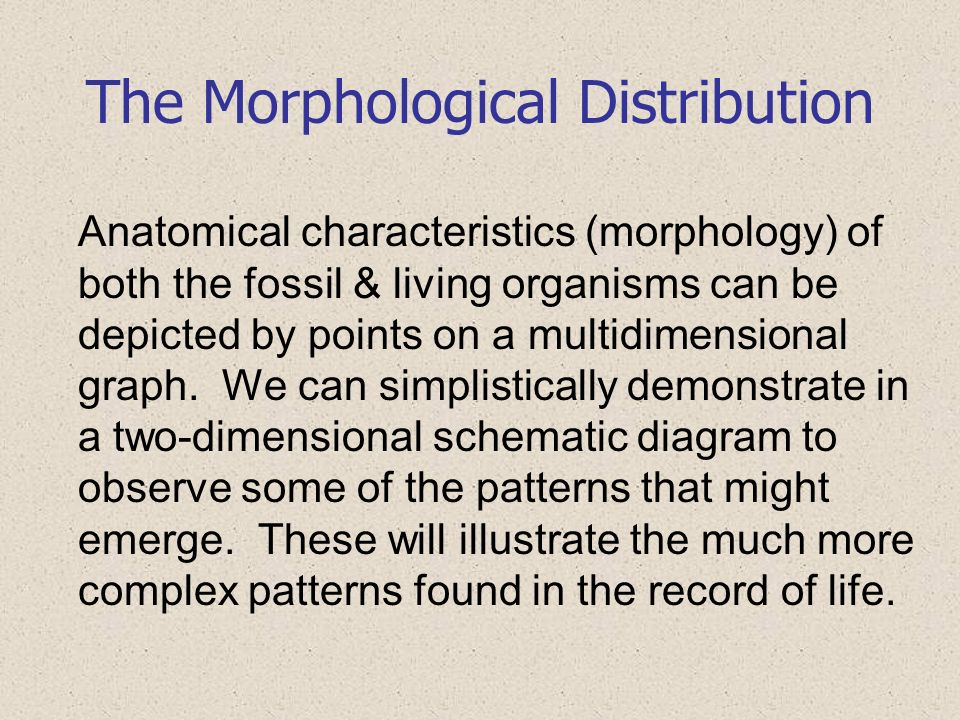 The Morphological Distribution Anatomical characteristics (morphology) of both the fossil & living organisms can be depicted by points on a multidimen