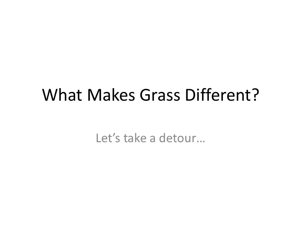 What Makes Grass Different Lets take a detour…