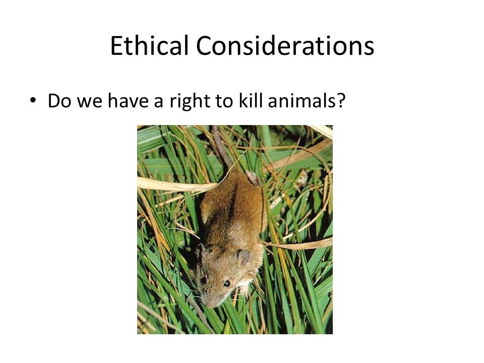 Ethical Considerations Do we have a right to kill animals