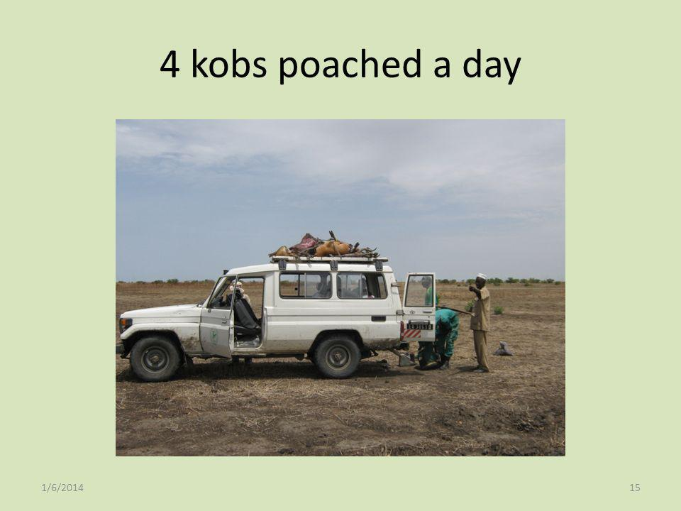 4 kobs poached a day 1/6/201415