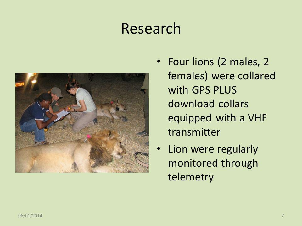 Research Four lions (2 males, 2 females) were collared with GPS PLUS download collars equipped with a VHF transmitter Lion were regularly monitored th