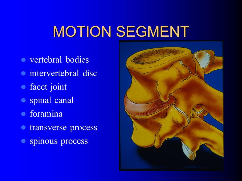 MOTION SEGMENT vertebral bodies intervertebral disc facet joint spinal canal foramina transverse process spinous process