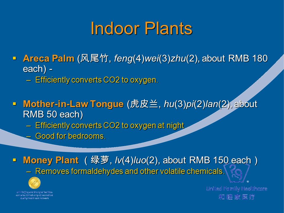 Indoor Plants Areca Palm (, feng(4)wei(3)zhu(2), about RMB 180 each) - Areca Palm (, feng(4)wei(3)zhu(2), about RMB 180 each) - –Efficiently converts CO2 to oxygen.