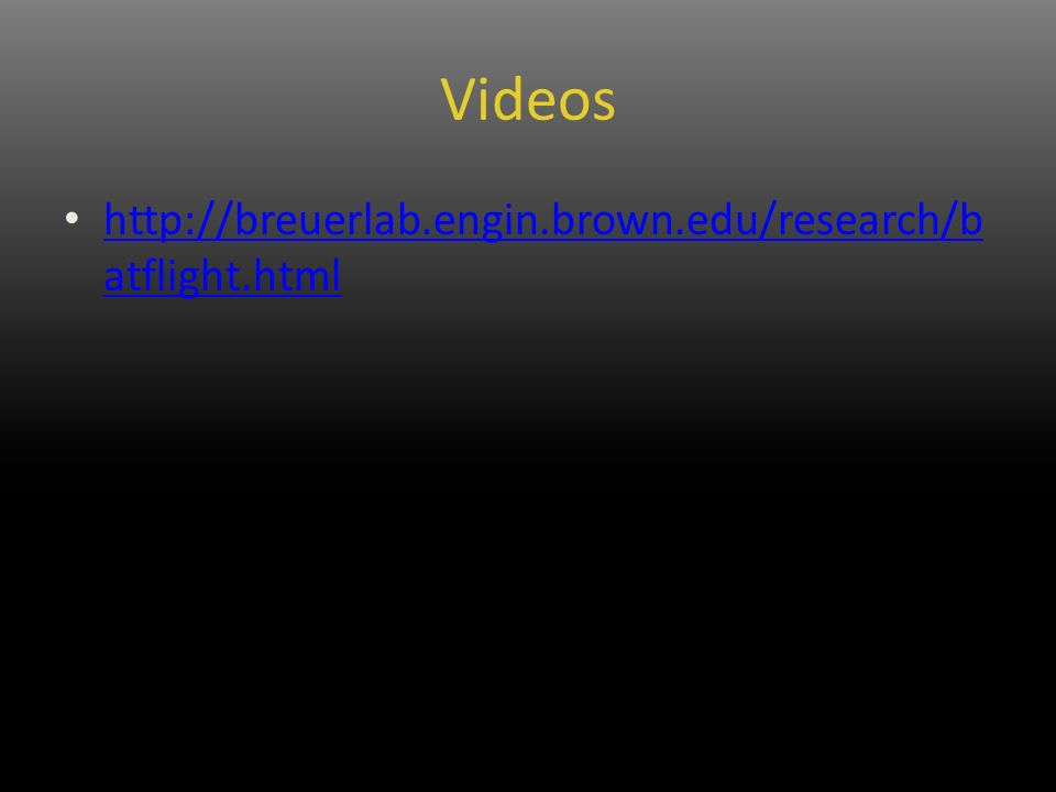 Videos http://breuerlab.engin.brown.edu/research/b atflight.html http://breuerlab.engin.brown.edu/research/b atflight.html