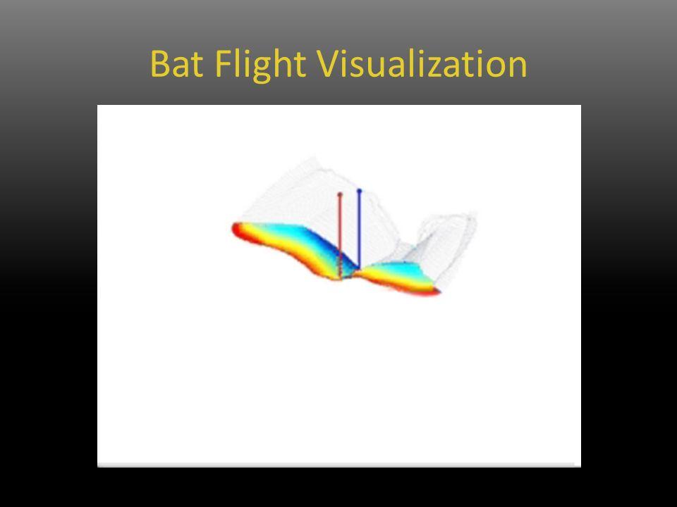 Bat Flight Visualization