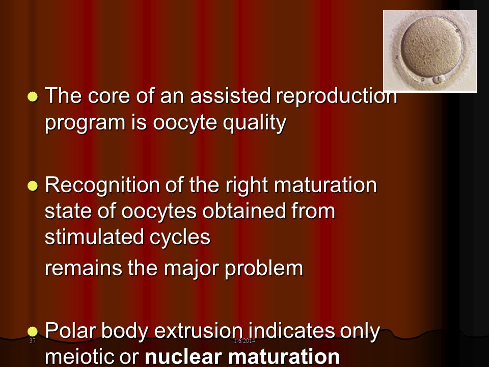 37 The core of an assisted reproduction program is oocyte quality The core of an assisted reproduction program is oocyte quality Recognition of the ri