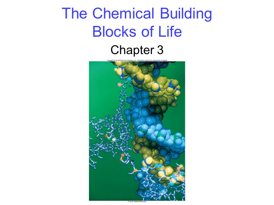 The Chemical Building Blocks of Life Chapter 3