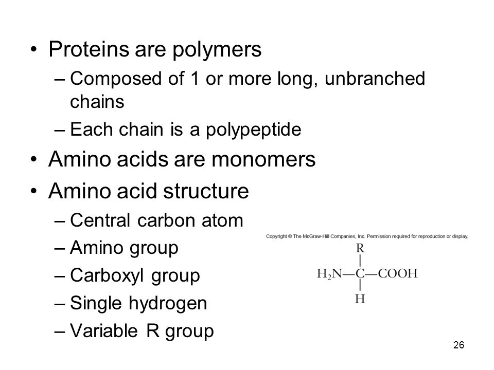 26 Proteins are polymers –Composed of 1 or more long, unbranched chains –Each chain is a polypeptide Amino acids are monomers Amino acid structure –Ce