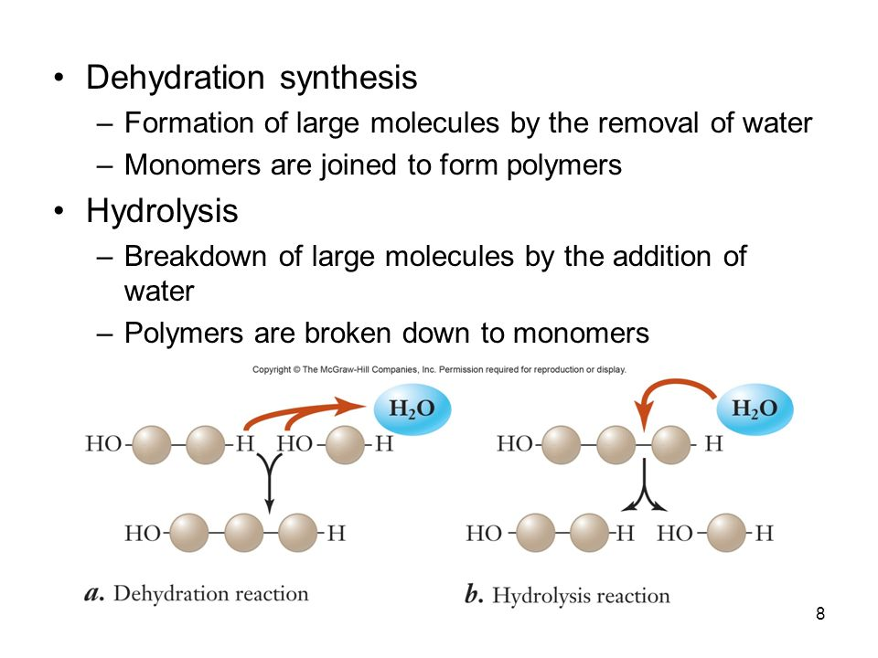 8 Dehydration synthesis –Formation of large molecules by the removal of water –Monomers are joined to form polymers Hydrolysis –Breakdown of large mol