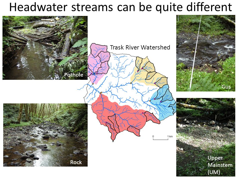 Headwater streams can be quite different Pothole Rock Upper Mainstem (UM) Gus Trask River Watershed