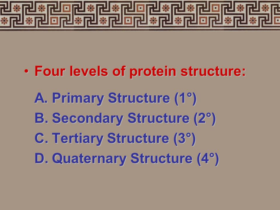 A proteins structure depends on its specific jobA proteins structure depends on its specific job The sequence of amino acids and the shape of the chai