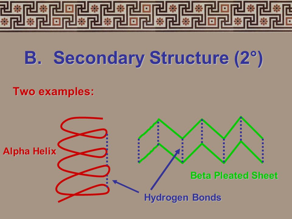 B.Secondary Structure (2°) primary structurecoilspleats hydrogen bonds3-dimensional folding arrangement of a primary structure into coils and pleats h