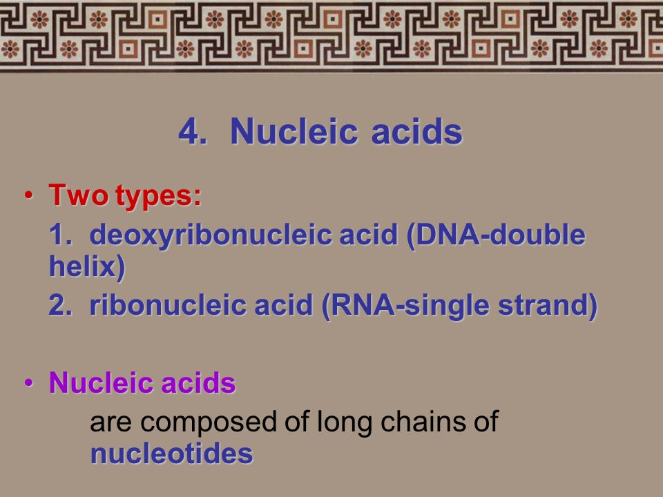 4. Nucleic acids Nucleic acids (DNA and RNA) control cell activities by controlling protein synthesisNucleic acids (DNA and RNA) control cell activiti