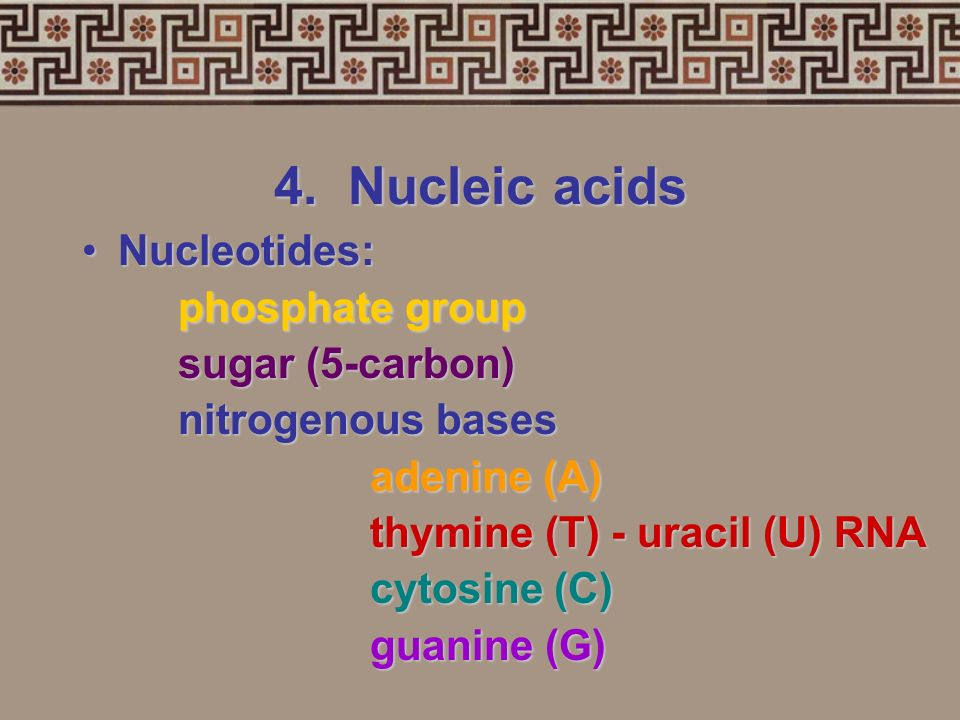 4. Nucleic acids Two types:Two types: 1. deoxyribonucleic acid (DNA-double helix) 2. ribonucleic acid (RNA-single strand) Nucleic acidsNucleic acids n