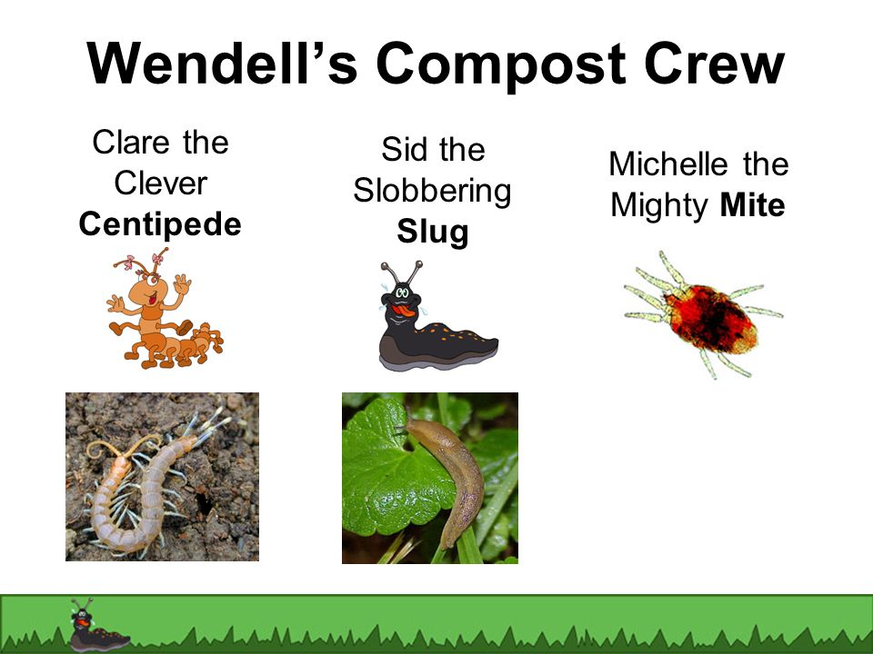 Sid the Slobbering Slug Clare the Clever Centipede Michelle the Mighty Mite Wendells Compost Crew
