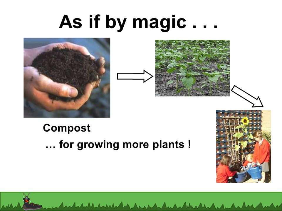 As if by magic... Compost … for growing more plants !