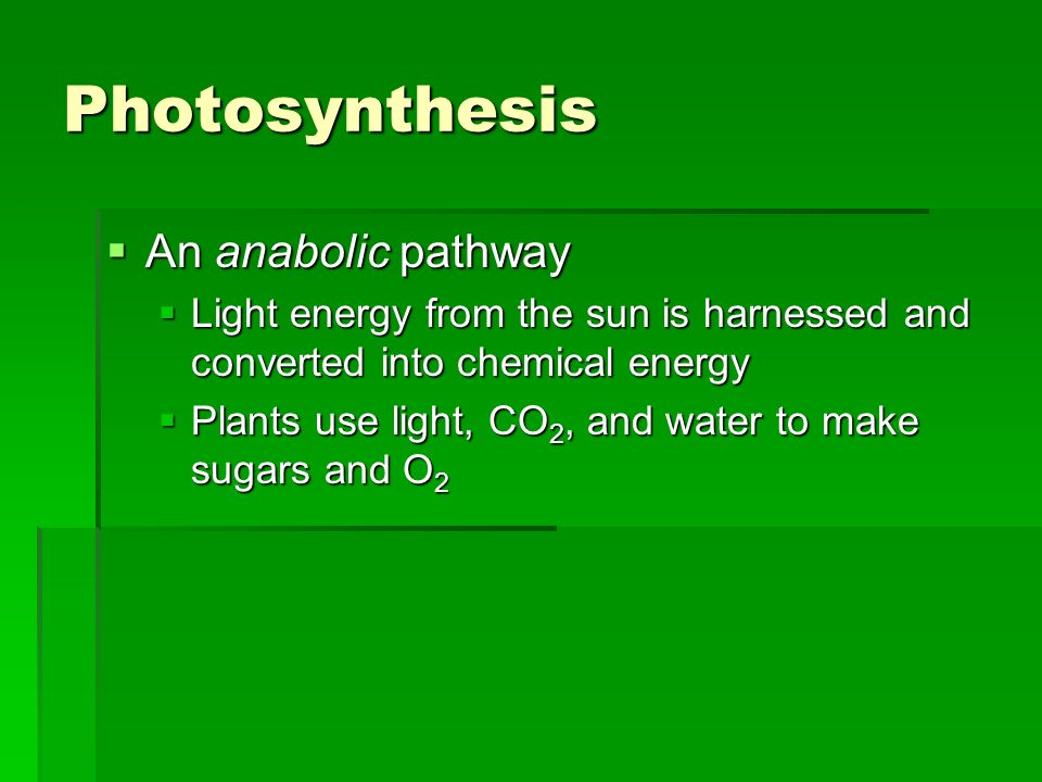 Photosynthesis An anabolic pathway An anabolic pathway Light energy from the sun is harnessed and converted into chemical energy Light energy from the sun is harnessed and converted into chemical energy Plants use light, CO 2, and water to make sugars and O 2 Plants use light, CO 2, and water to make sugars and O 2