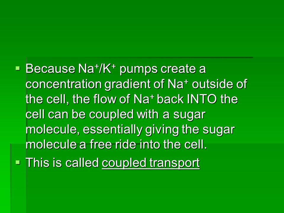Because Na + /K + pumps create a concentration gradient of Na + outside of the cell, the flow of Na + back INTO the cell can be coupled with a sugar molecule, essentially giving the sugar molecule a free ride into the cell.